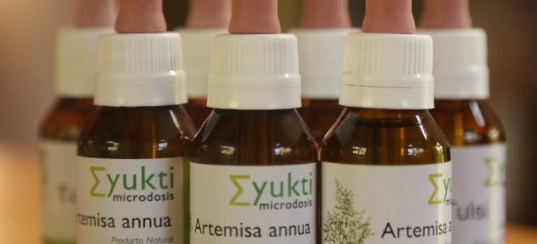 Artemisa Annua – Cómo hacer microdosis?