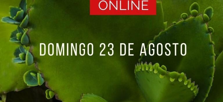 Curso de microdosis de plantas medicinales – Agosto 2020